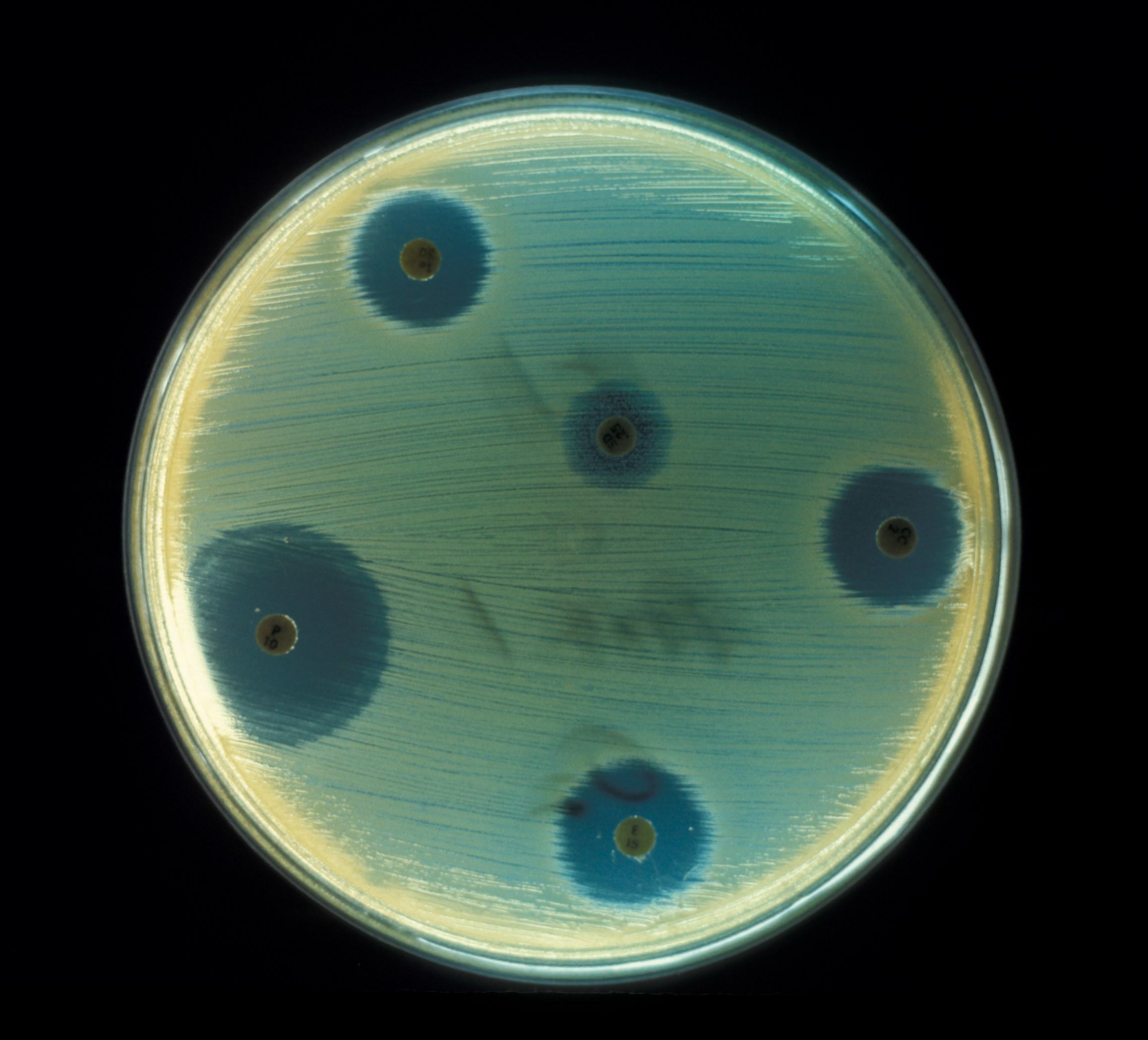 Microorganismos indicadores de higiene